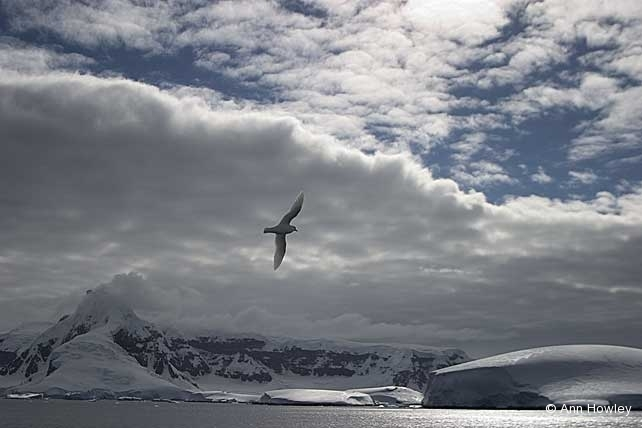 Bird Landscape, Antarctica