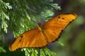 Redding Butterfly