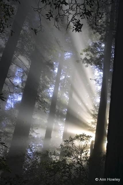 Damnation Trail #1, California
