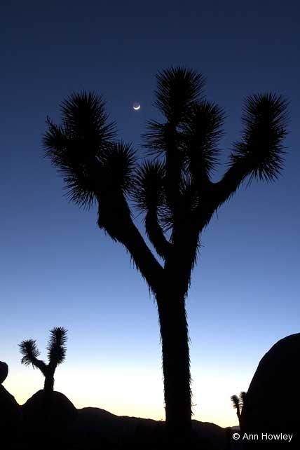Joshua Tree Moon, California