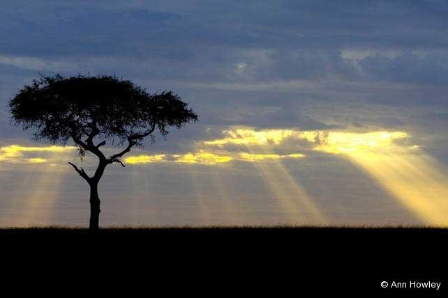 Blue Sunrise, Kenya