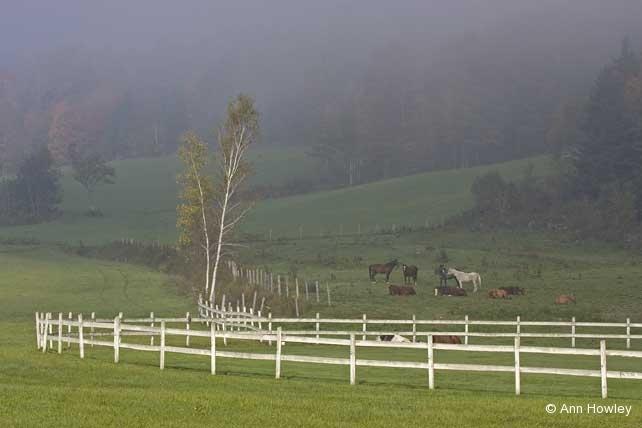 Horses in Fog, Vermont