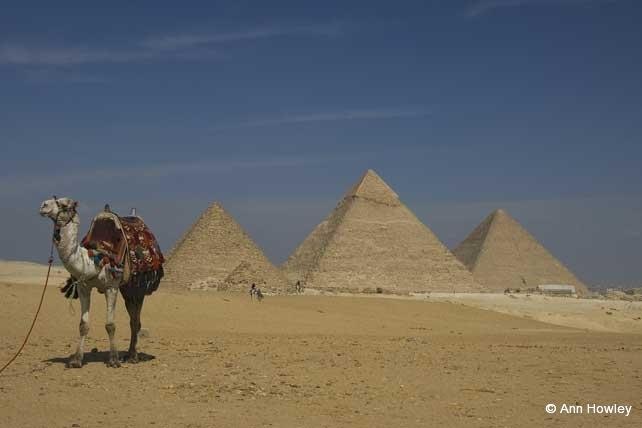 Giza Camel, Egypt