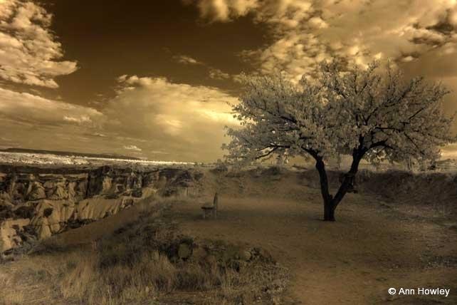 Tree Infrared, Turkey