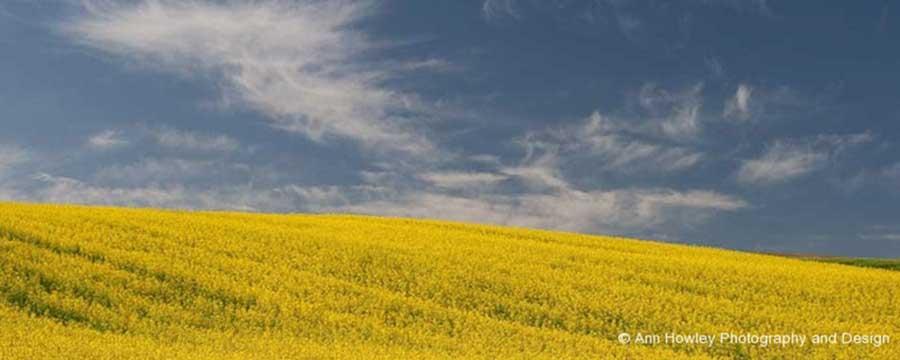 Yellow Field, Spain