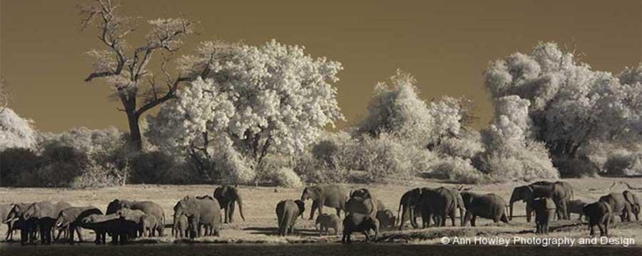 Botswana Infrared #2