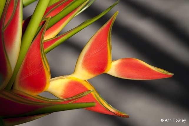 Flowers, Guatemala
