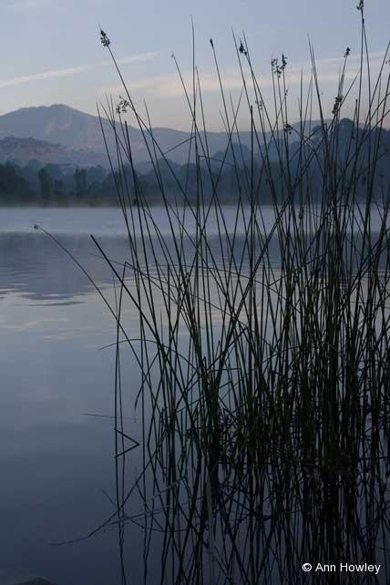 Lake Atitlan Reeds, Guatemala