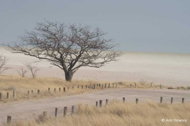 African Tree, Namibia