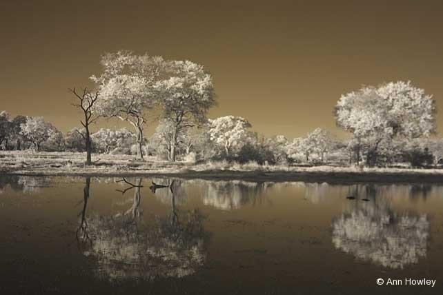 Botswana Infrared #1