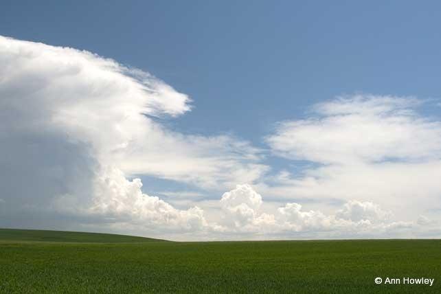 Green Field, Spain