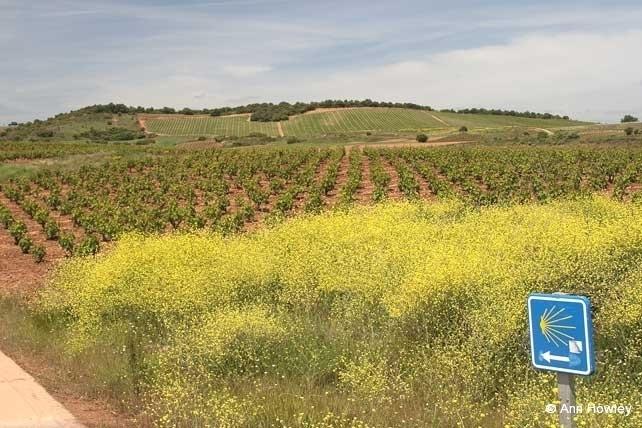 Najera Field, Spain