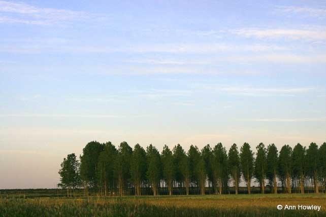 Tree Lined #1, Spain