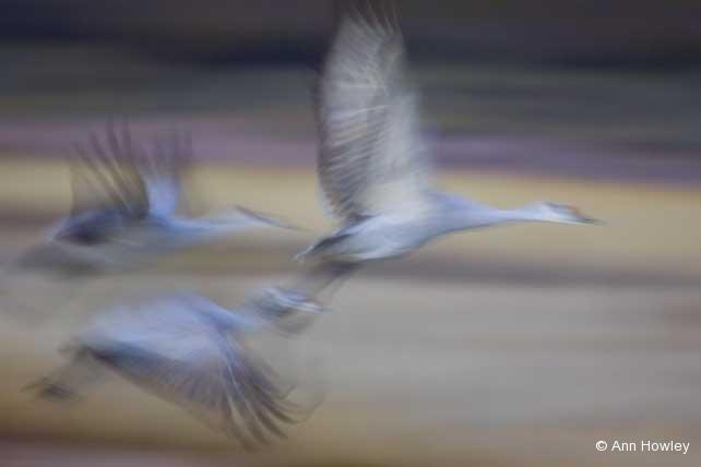 Cranes In Flight #4, New Mexico