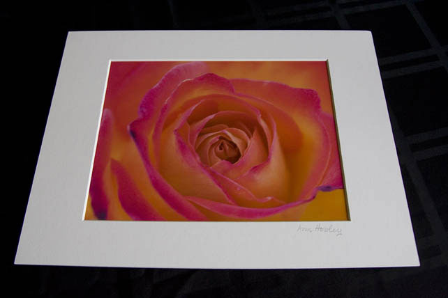 San Francisco Rose Matted Print