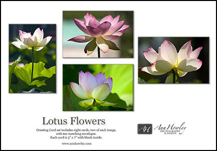 lotus flowers greeting card box ann howley photography design